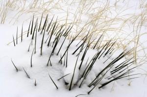 yucca_grasses